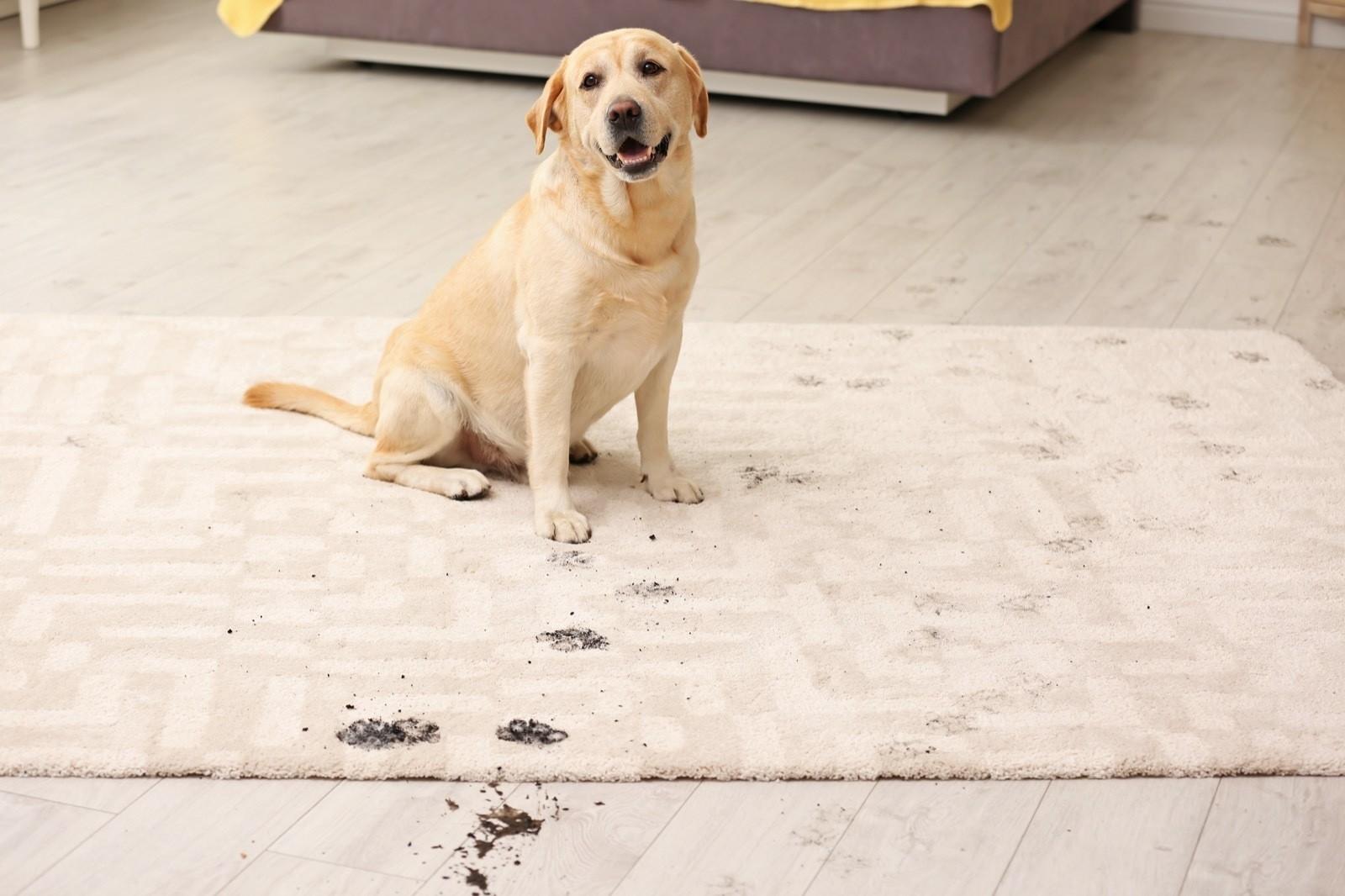 Rug care tips | Staff Carpet